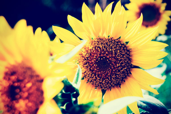 9 razones para elegir tocoferoles naturales